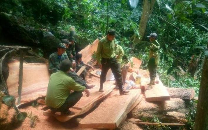 Phát hiện, bắt giữ đối tượng khai thác gỗ trái phép...